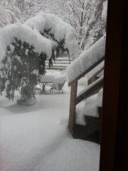 Looking out the window to back deck