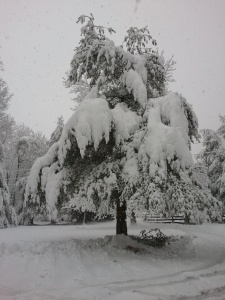 The snow is very wet and heavy; really weighs the branches down